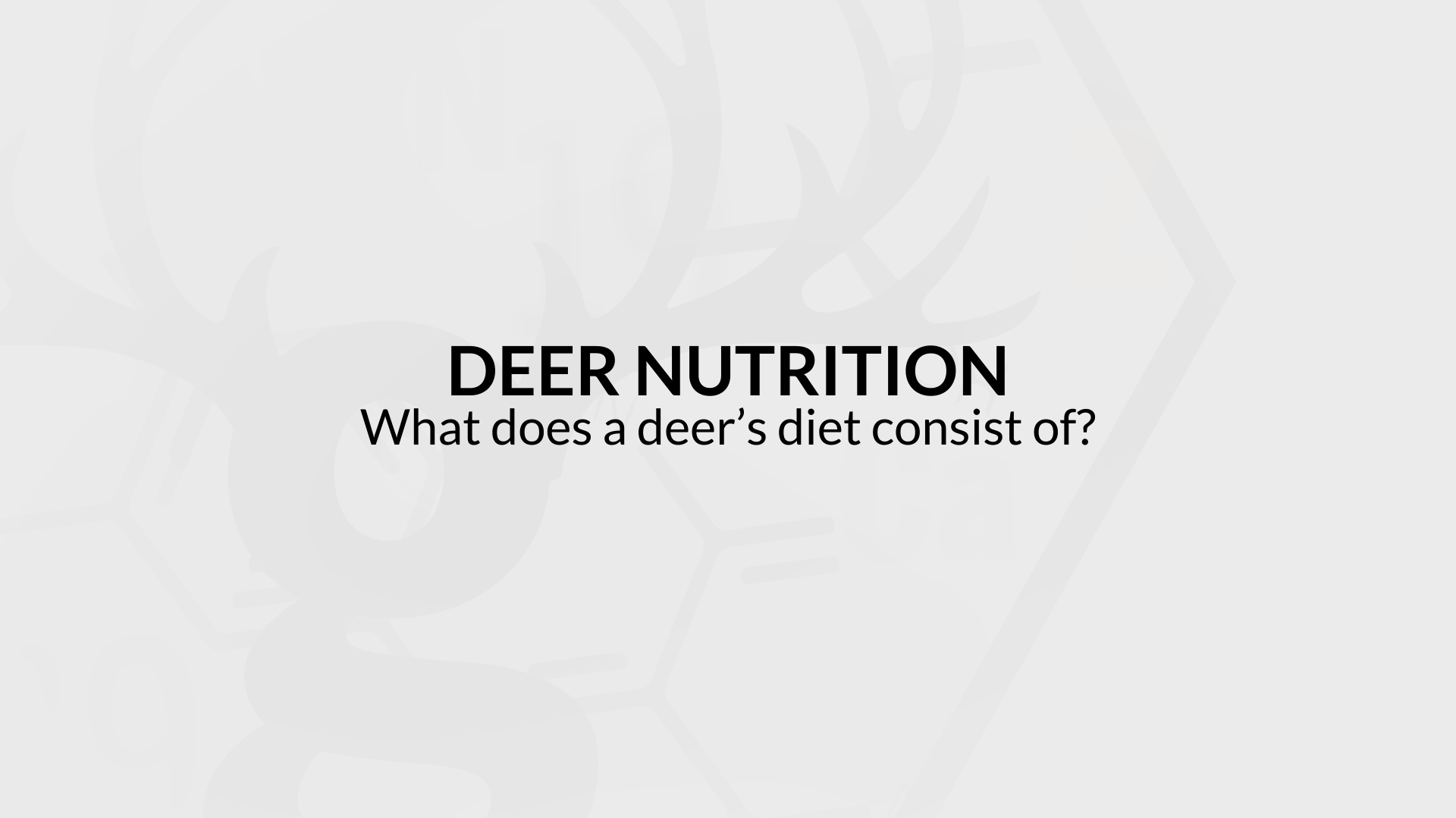 What does a deer's diet consist of?